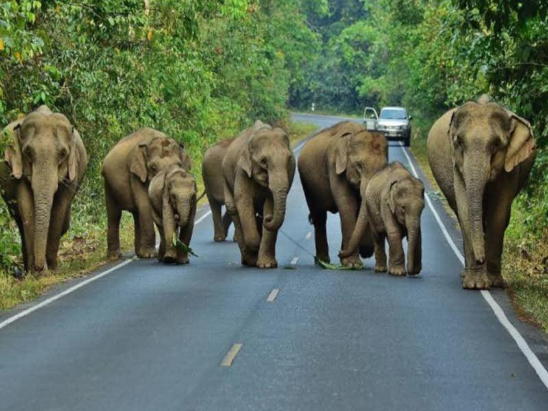 ประกันรถยนต์ชั้น1 ช้างเหยียบรถ