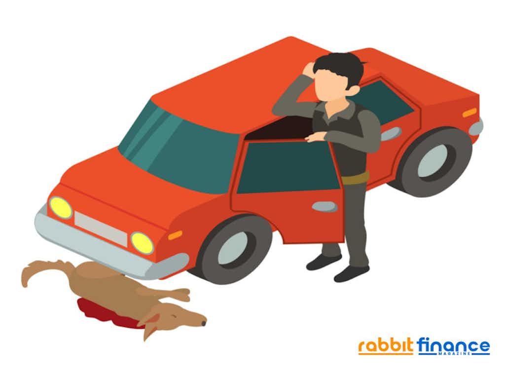 ขับรถชนสัตว์